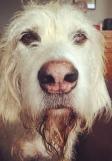 Jasper, disapproving